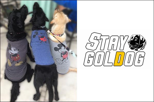 STAY GOLDOG